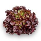 Picture of Lettuce Red Oak Each