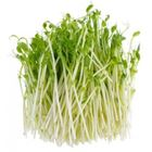 Picture of Herb Snow Pea Sprouts 160g Punnet